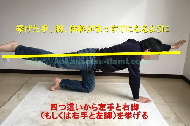 体幹トレーニング4アームレッグクロスレイズ