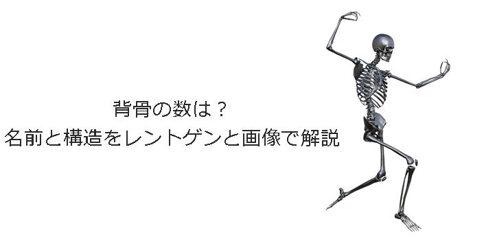 背骨の数は?名前と構造をレントゲンと図でわかりやすく解説します