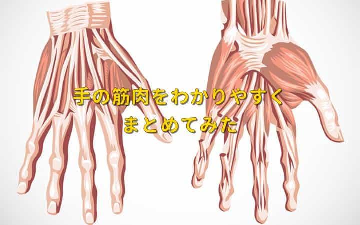手の筋肉の解剖を図で名称と構造が覚えられるようにやさしく解説